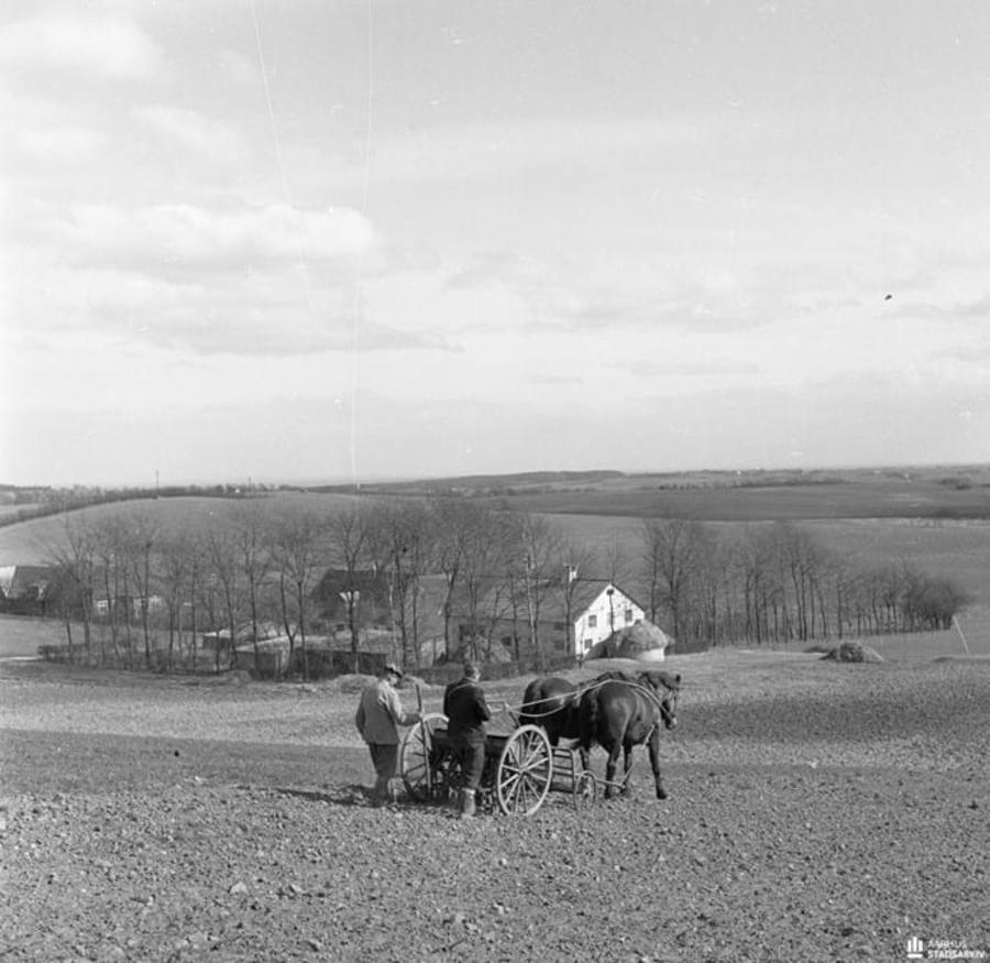 Billedet viser to mænd og et hestespand sår en mark i Holme Bjerge en forårsdag i 1954.