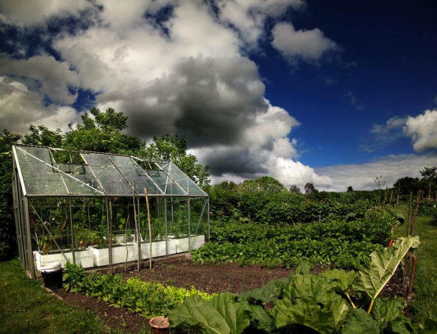 Sommerlandskab med drivhus